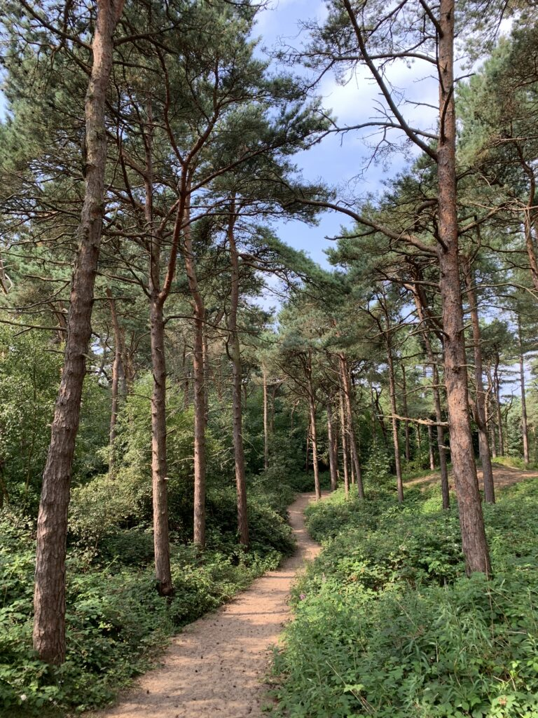 formby pinewoods forest